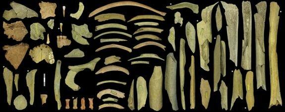 кости неандертальцев