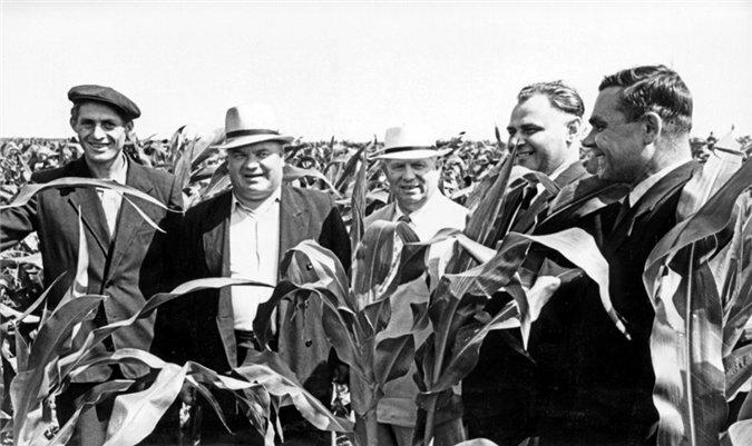 Хрущев на кукурузных полях