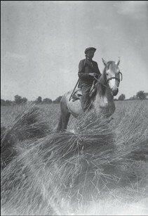 Комсомолец стережет колхозный урожай, Полтавская область, 1932 год.