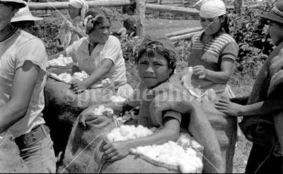 Ребенок занятый на хлопковой плантации в Санта-Крус. Фото 1970-е гг.