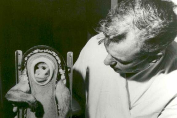 обезьяна Хуан