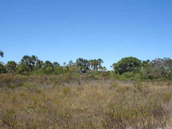 Сертан в национальном парке Grande Sertão Veredas, Бразилия